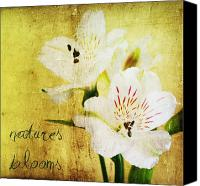 Textures Canvas Prints - Natures Blooms Canvas Print by Cathie Tyler