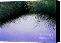 Grasses Canvas Prints - Natures Eyelashes Canvas Print by Cindy Lee Longhini