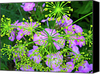 Wild Geranium Canvas Prints - Natures Fireworks Canvas Print by Randy Rosenberger