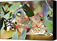 Eaten Canvas Prints - Natures Lace Canvas Print by Kaye Menner