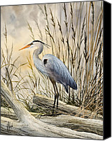 Wildlife Greeting Cards Canvas Prints - Natures Wonder Canvas Print by James Williamson