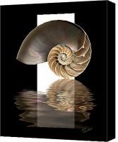Chambers Canvas Prints - Nautilus Shell Canvas Print by Judi Quelland