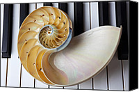 Chambers Canvas Prints - Nautilus shell on piano keys Canvas Print by Garry Gay