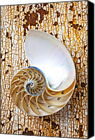 Chambers Canvas Prints - Nautilus shell on rusty table Canvas Print by Garry Gay
