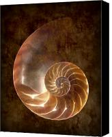 Still Life Canvas Prints - Nautilus Canvas Print by Tom Mc Nemar