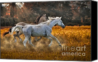 Arabians Canvas Prints - Neck And Neck Canvas Print by Susan Candelario