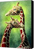 Giraffes Canvas Prints - Neck and neck... Canvas Print by Will Bullas