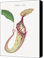Custom Framed Art Canvas Prints - Nepenthes x mixta Canvas Print by Scott Bennett