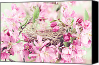 Tree Blossoms Canvas Prints - Nest in Soft Pink Canvas Print by Stephanie Frey