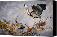 Herons Canvas Prints - Nesting Time Canvas Print by Debra and Dave Vanderlaan