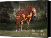 Filly Canvas Prints - New Born Canvas Print by David  Naman