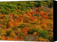 Vivid Colors Canvas Prints - New England Fall Foliage Peak  Canvas Print by Juergen Roth