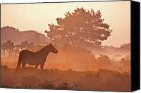 Pony Canvas Prints - New Forest Pony In Mist At Dawn. Canvas Print by Julie Mitchell/Southdowns Photographics