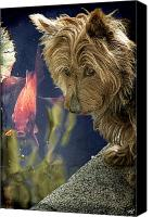 Scottie Dog Canvas Prints - New Friends Canvas Print by Chris Lord
