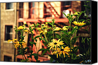 Nyc Fire Escapes Canvas Prints - New York City Flowers Along the High Line Park Canvas Print by Vivienne Gucwa