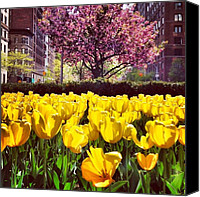 Pink Canvas Prints - New York City in the Spring Canvas Print by Vivienne Gucwa
