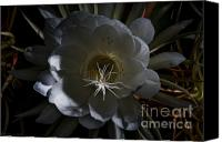 Cereus Canvas Prints - Night-Blooming Cereus Deep 2 Canvas Print by Warren Sarle