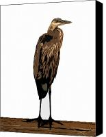 Bird Art Canvas Prints - Night Heron Canvas Print by David Lee Thompson