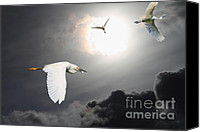 Snowy Egrets Canvas Prints - Night of The White Egrets Canvas Print by Wingsdomain Art and Photography