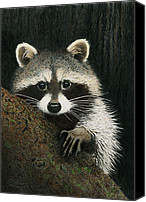 Raccoon Drawings Canvas Prints - Night Raider Canvas Print by Brent Ander