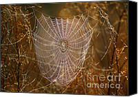 Spider Web Canvas Prints - Night Weaver Canvas Print by Carol Groenen