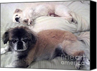 Dog Bed Photo Canvas Prints - Nighty night All Canvas Print by DJ Laughlin