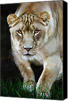 Tampa Digital Art Canvas Prints - Nikita Canvas Print by Big Cat Rescue