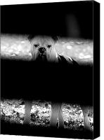 Dogs Canvas Prints - No Bull Canvas Print by Emily Stauring
