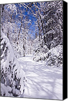 Winter Prints Canvas Prints - No Footprints Canvas Print by Rob Travis