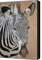 Zebra Pastels Canvas Prints - Nomad  Canvas Print by Carol McCarty