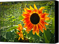 Featured Special Promotions - Noontime Sunflowers Canvas Print by Jiayin Ma
