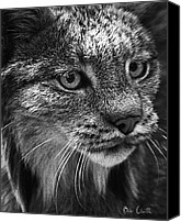 Animal Photo Canvas Prints - North American Lynx In The Wild. Canvas Print by Bob Orsillo