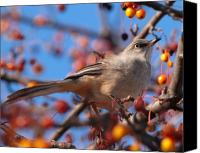 Fall Canvas Prints - Northern Mockingbird Canvas Print by Bob Orsillo