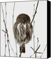 One Mixed Media Canvas Prints - Northern Pygmy Owl - Little One Canvas Print by Reflective Moments  Photography and Digital Art Images