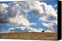 Rural Scenes Canvas Prints - Not a Cow in the Sky Canvas Print by Peter Tellone