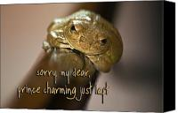 Fun Frog Canvas Prints - Not Prince Charming Canvas Print by Carolyn Marshall