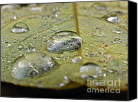 Fine Photography Art Canvas Prints - November Rain Canvas Print by Juergen Roth