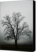 Winter Promise Canvas Prints - November Tree In Fog Canvas Print by Patricia Motley