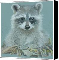 Raccoon Drawings Canvas Prints - Now I lay me down to sleep Canvas Print by Vera Rodgers