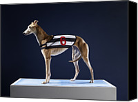 Racing Number Canvas Prints - Number 6 Greyhound, Profile Canvas Print by Michael Blann