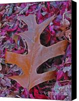 Fall Foliage Artwork Canvas Prints - Oak Leaf Canvas Print by Juergen Roth
