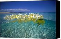 Plumeria Canvas Prints - Ocean Surface Canvas Print by Vince Cavataio - Printscapes