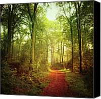 Dirt Road Canvas Prints - October Forest Canvas Print by Dirk Wstenhagen Imagery