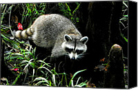 Raccoon Digital Art Canvas Prints - October Raccoon I Canvas Print by Sheri McLeroy