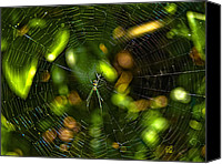 Barbara Middleton Canvas Prints - Oh The Web We Weave Canvas Print by Barbara Middleton