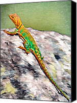 Grey Canvas Prints - Oklahoma Collared Lizard Canvas Print by Jeff Kolker