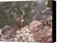 Mule Deer Canvas Prints - Old Buck Canvas Print by Ernie Echols
