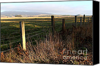 Point Reyes National Seashore Canvas Prints - Old Fence And Landscape At Point Reyes California . 7D9968 Canvas Print by Wingsdomain Art and Photography
