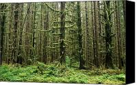 Selection Canvas Prints - Old Growth Forest In The Hoh Rain Canvas Print by Natural Selection Craig Tuttle