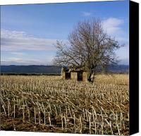 Run Down Canvas Prints - Old hut isolated in a field. Auvergne. France Canvas Print by Bernard Jaubert